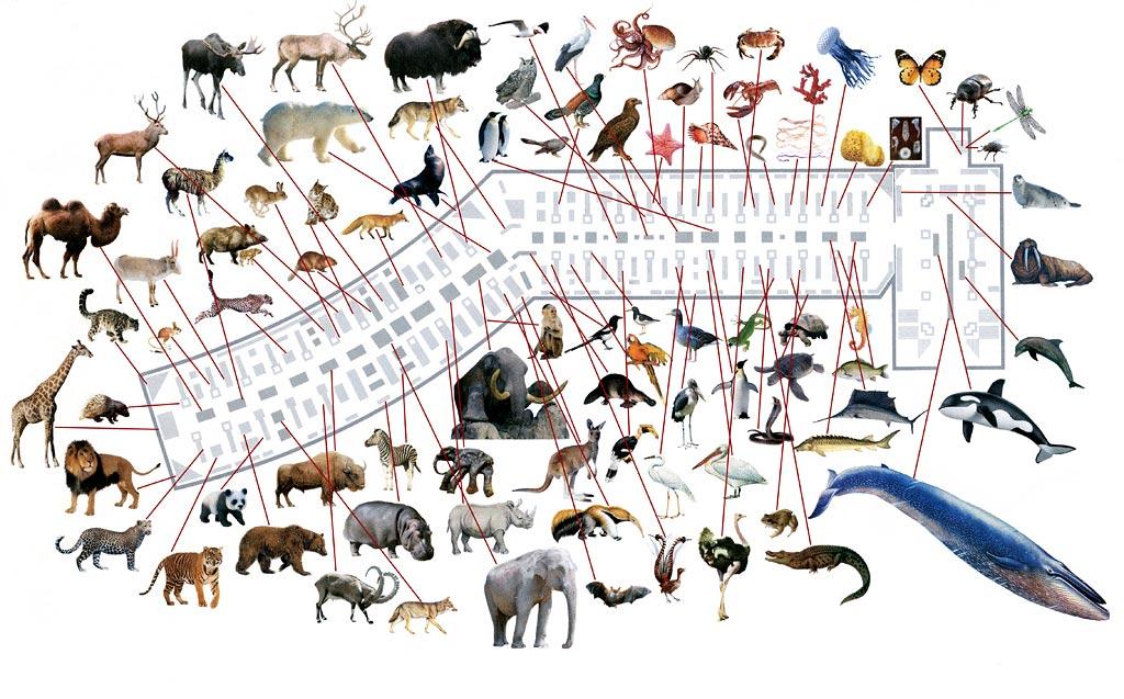 Зоологический музей - план